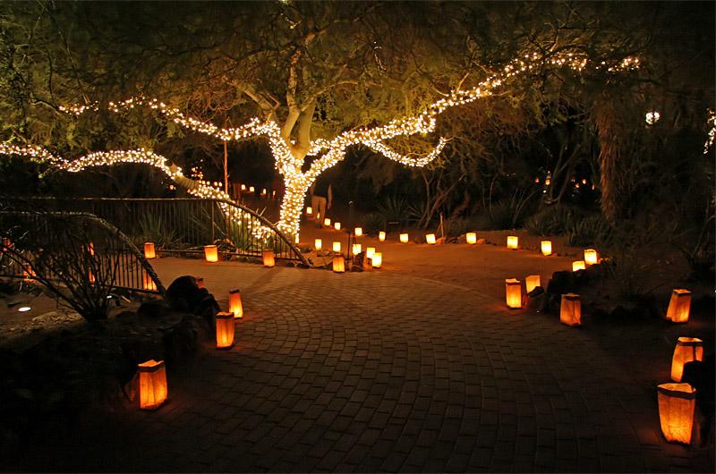 Phoenix Zoo Christmas Lights