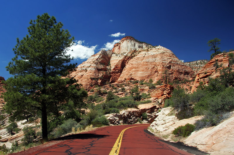 Standing in the middle of the road in Zion National Park in Utah looking at the red and white rock against the blue sky