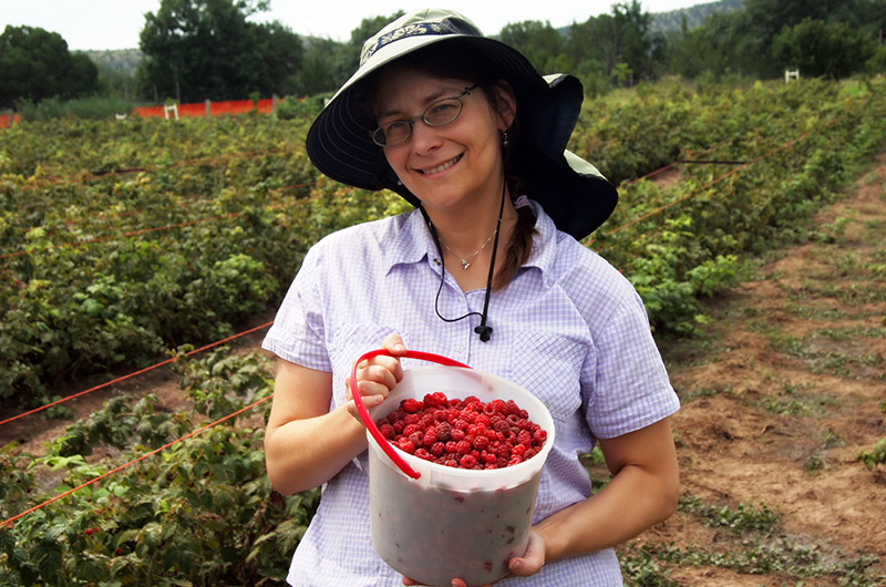Caroline Wise (Caroline Engelhardt from Frankfurt, Germany) at Lavender Springs Ranch in Arabela, New Mexico picking raspberries