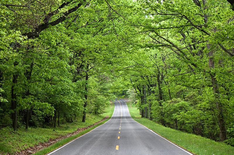 Tree lined stretch of the Skyline Drive Scenic Byway in Shenandoah National Park, Virginia