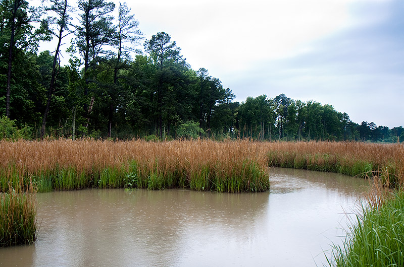 The wetlands surrounding Jamestown, Virginia