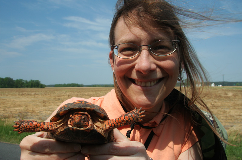 Caroline Wise rescuing a turtle from the road near the Chesapeake Bay in Maryland May 2007
