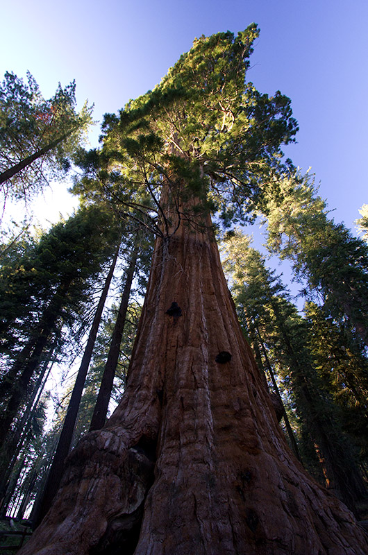 The General Grant Sequoia tree, the second largest tree on earth at Kings Canyon National Park, California