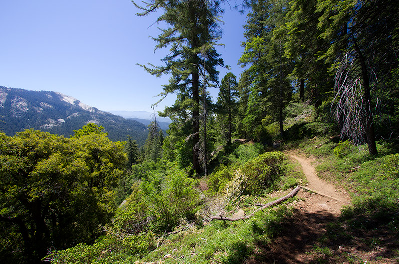 On the Sugarbowl trail in Redwood Canyon - part of Kings Canyon National Park in California