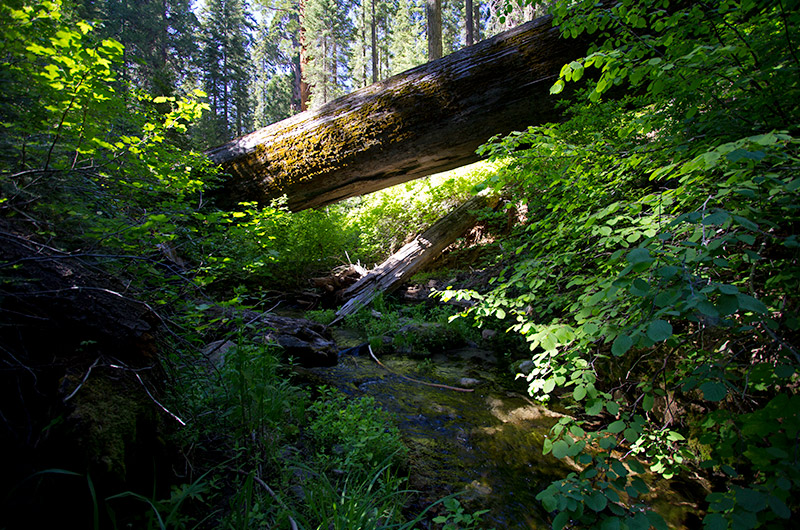 A stream flowing under a fallen tree in Kings Canyon National Park, California