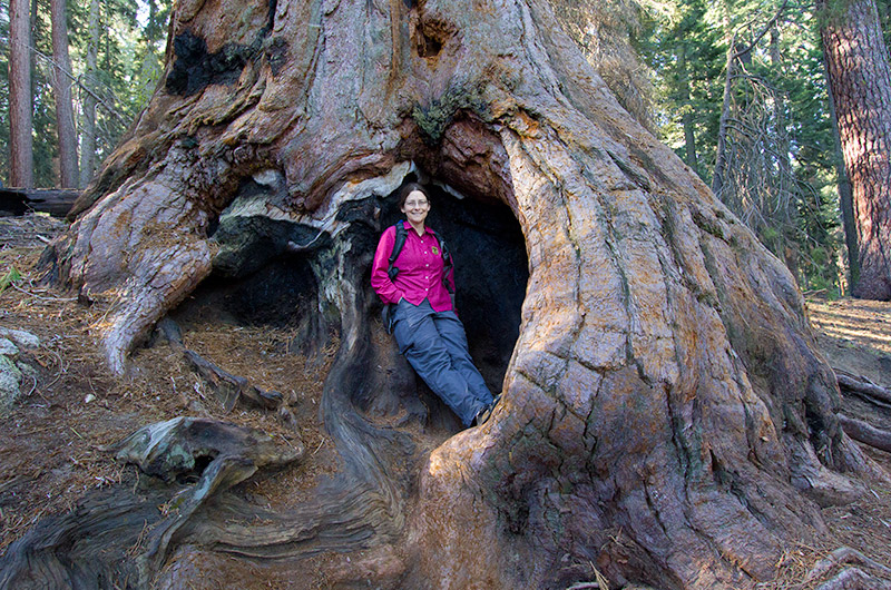 Caroline Wise standing in the trunk of a giant Sequoia tree in Sequoia National Park, California