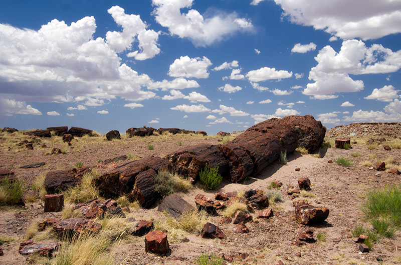 Petrified wood against a fluffy white cloud sky in Petrified Forest National Park, Arizona