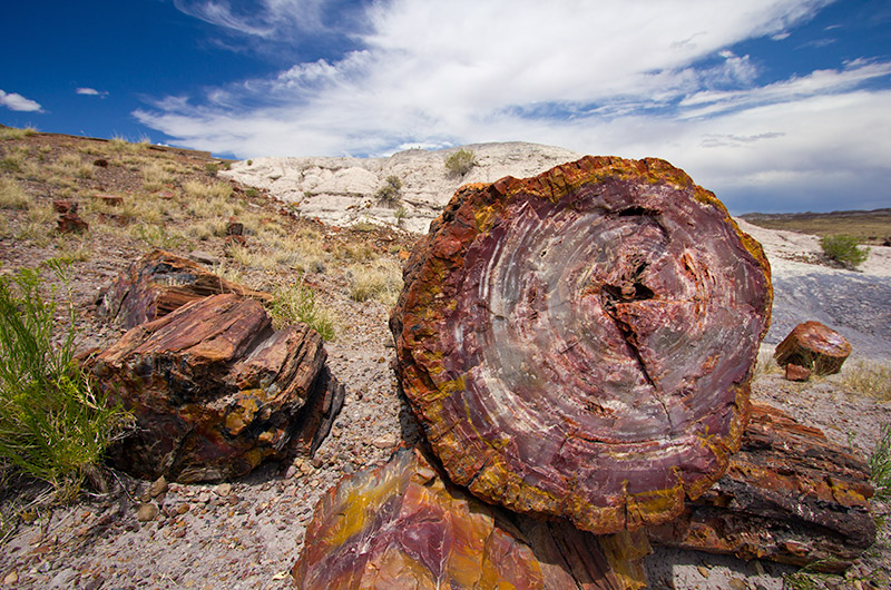 Petrified wood at Petrified Forest National Park in Arizona
