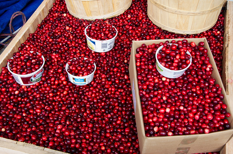Cranberries for sale at Jean-Talon Market in Montreal, Canada