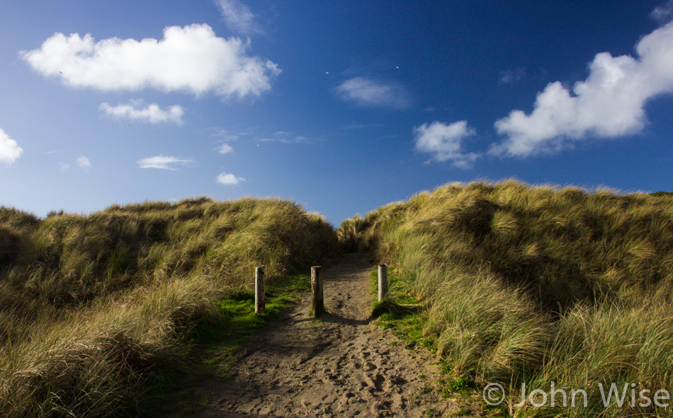 A trail leading to the beach over sand dunes and beach grasses on the Oregon coast